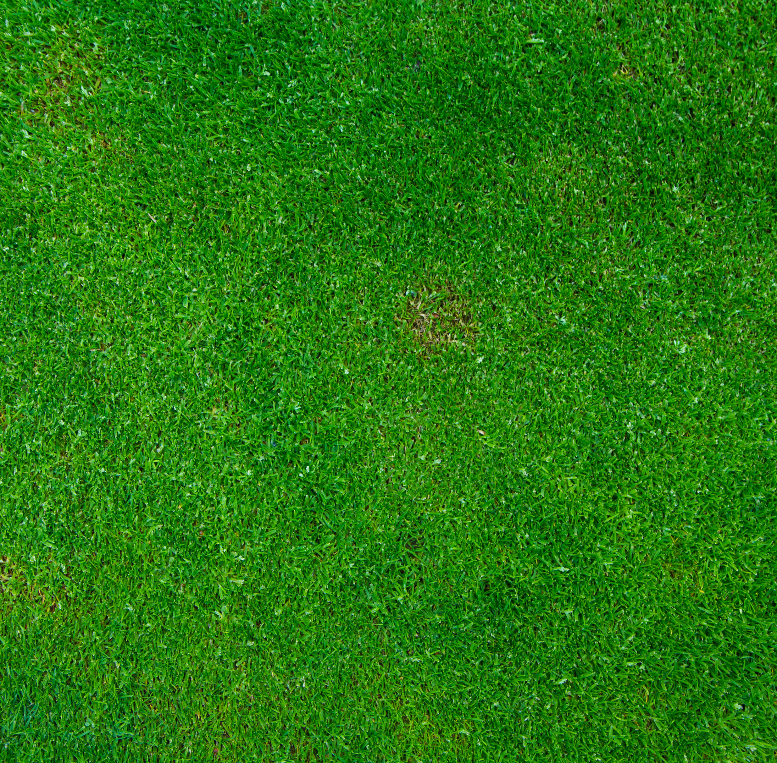 photodune-4624970-background-of-green-grass-l1